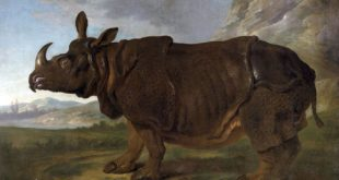 """Perhaps the most famous rhinoceros who ever lived..."" Portrait of Clara in Paris in 1749, by Jean-Baptiste Oudry."
