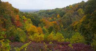 https://upload.wikimedia.org/wikipedia/commons/b/b9/Parque_Estatal_Brown_County,_Indiana,_Estados_Unidos,_2012-10-14,_DD_10.jpg