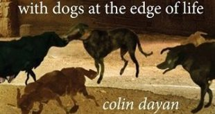 bk cover with dogs dayan